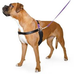 Ancol Happy at Heel Dog Harness and DVD