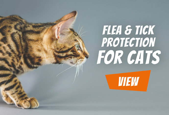 Flea & Tick Protection for cats