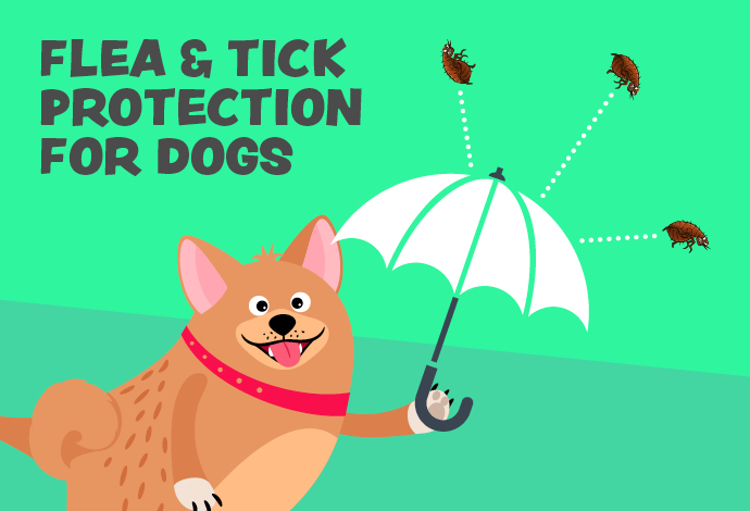 Flea & Tick Protection for dogs