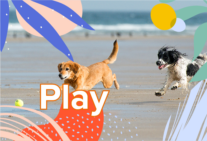 Products for your pet to play with