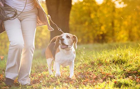 5 tips on avoiding ticks this autumn