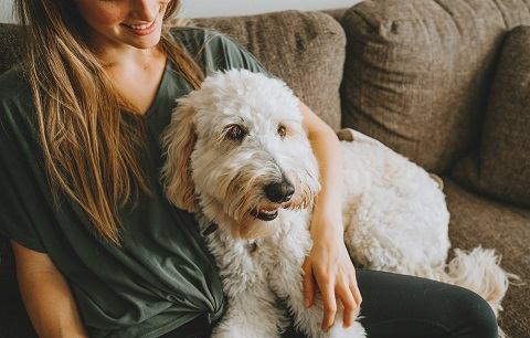 How you can support your dog's mental well-being