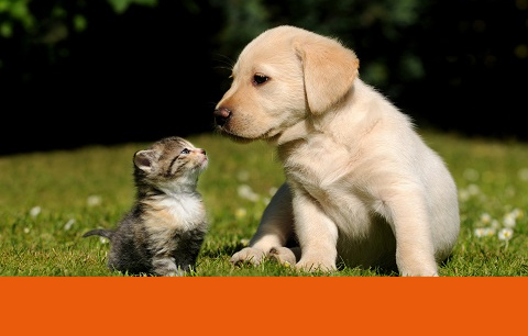 Flea and tick prevention for puppies and kittens