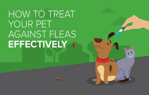 How to treat your pet against fleas effectively