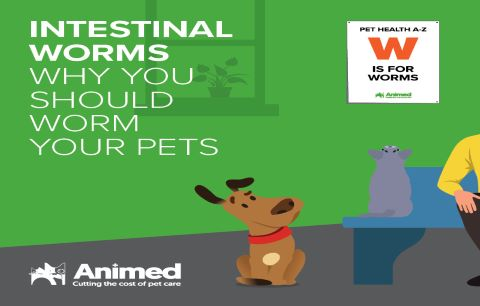 Intestinal Worms why you should worm your pets