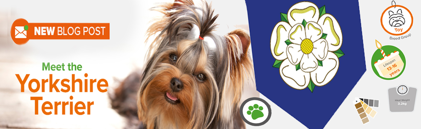 All about the Yorkshire Terrier!