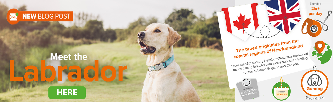 Find out more about the Labrador