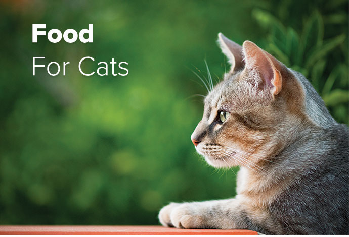 Shop ALL Cat Food Now!