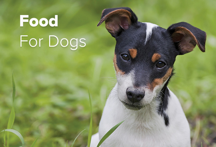 Shop ALL Dog Food Now!