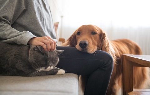Pet supplements for dogs and cats
