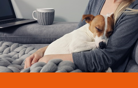 The impact of COVID-19 on our pets