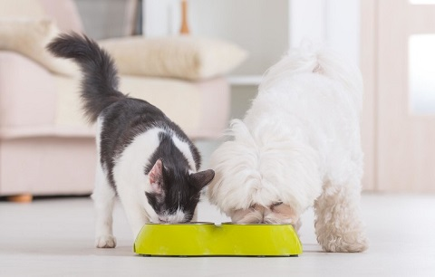 Your guide to senior diets for dogs & cats