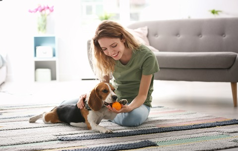 Fun Indoor Games for Dogs